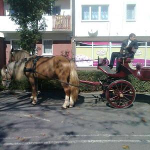 2012-10-07-22-32-polska-mladez-12